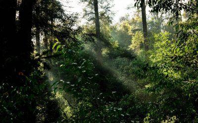 12 maneras para celebrar el Día Internacional de La Tierra