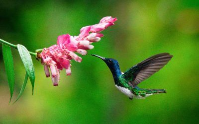 ¡Aventura! 7 destinos mágicos para conocer en Costa Rica.